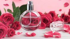 Pasos para hacer perfume de pétalos de rosa casero