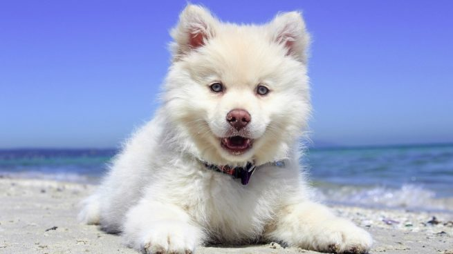 caja de arena para perros