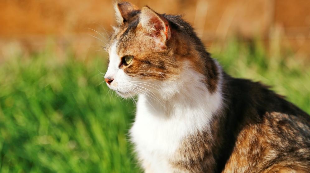 Cómo hacer un repelente para gatos casero con remedios naturales