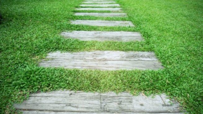 C mo hacer un sendero para jard n for Como podar un ciruelo de jardin