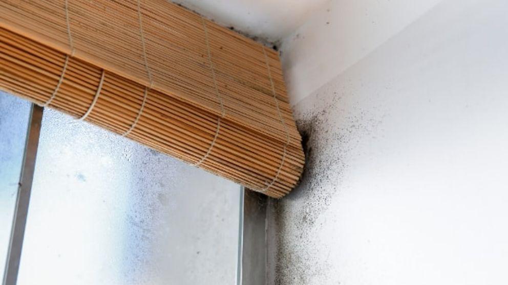 C mo quitar las humedades - Como quitar la humedad de mi casa ...