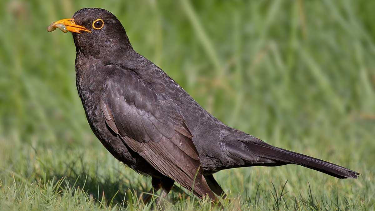 ¿Qué tipos de pájaros cantan por las noches y por qué?