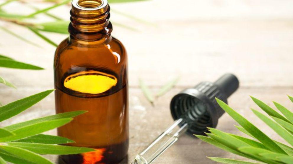 De qué modo puedes prevenir los piojos con aceite de árbol de te