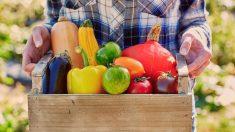 Aprende los pasos para pintar cajas de fruta de madera