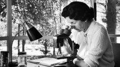 Frases célebres de Rachel Carson