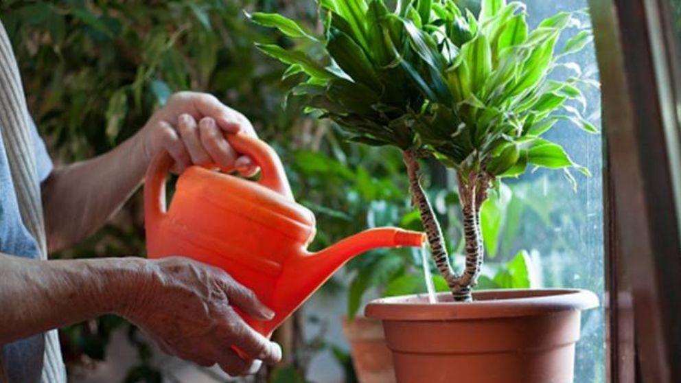 Aprende cómo hacer en casa tu propio jabón potásico