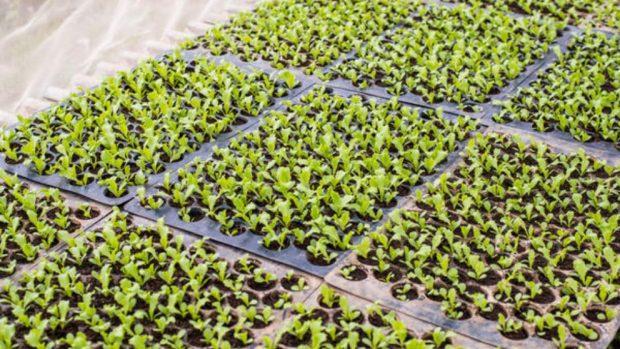 C mo hacer un cultivo hidrop nico casero for Cultivo interior casero