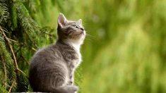 ¿Quién no ha oído la famosa frase de la curiosidad mató al gato?