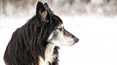 El origen de los perros, la primera raza animal creada por el ser humano