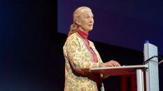 Sabias frases de Jane Goodall