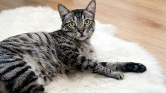 Cómo hacer juguetes para gatos que sean divertidos y originales