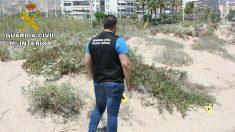 Un guardia civil, durante las investigaciones en las dunas de la Playa de Sant Antoni, en Cullera (Valencia)