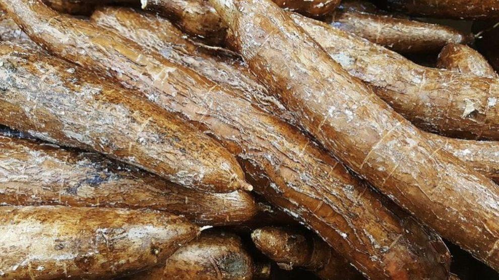 La yuca posee propiedades que beneficiarán a la salud de tu organismo.