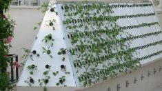 Los cultivos aeropónicos favorecen el mejor crecimiento de las plantas mediante el acceso del aire.