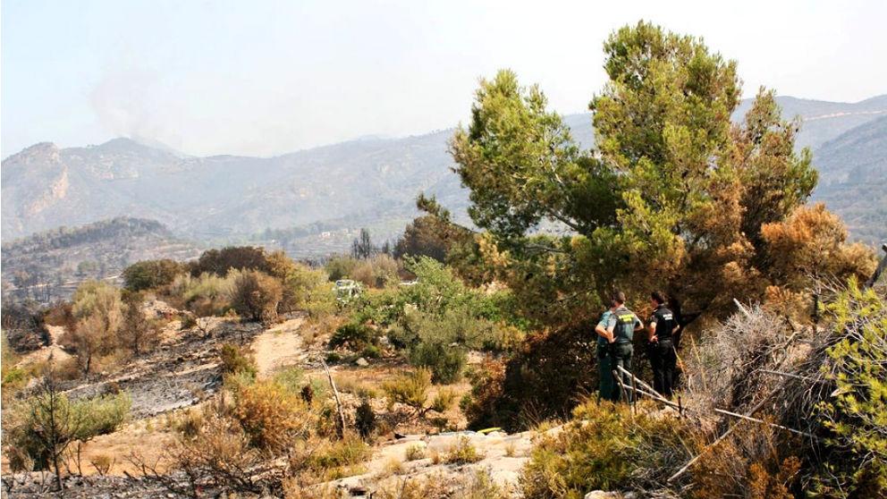 Varios guardias civiles inspeccionan el árbol que recibió el impacto del rayo y originó el incendio de Llutxent. (TW)