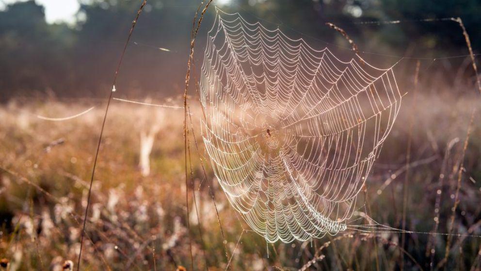 Aprende cómo se hace la tela de araña y cómo es de resistente