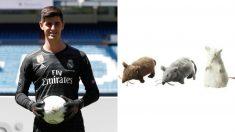 Algunos aficionados del Atlético proponen tirar ratas de peluche a Courtois.