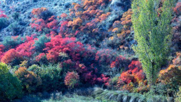 arbustos España