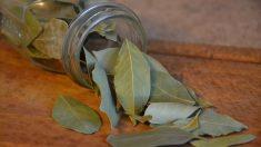 El laurel, uno de los arbustos comunes
