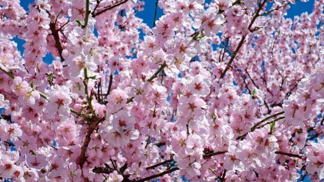 Conoce las flores japonesas