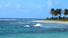 Los vientos alisios azotando una playa tropical.