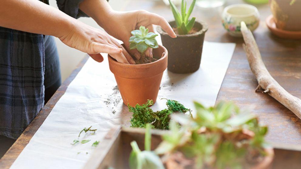 C mo cuidar plantas de interior for Plantas de interior lidl