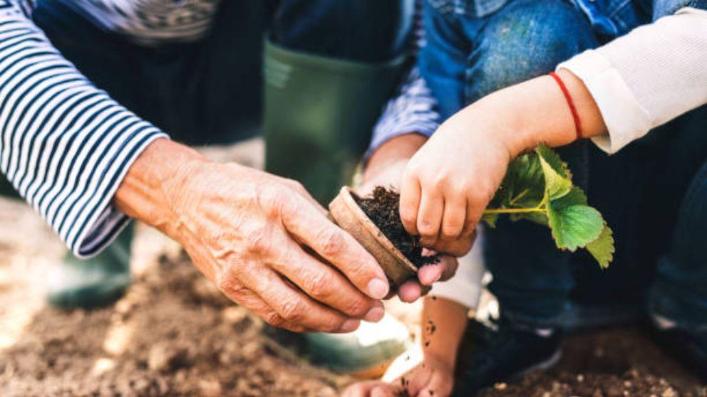 Todos los pasos para elegir las plantas de jardin