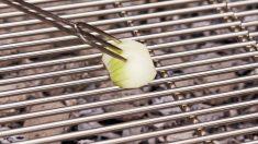 La cebolla y sus muchos usos para limpiar el hogar