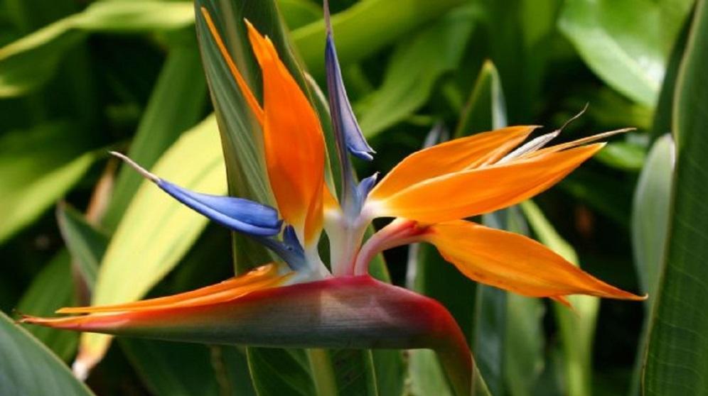 Cómo cuidar plantas tropicales según su tipo