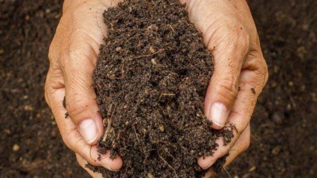 hausgemachter Bio-Kompost