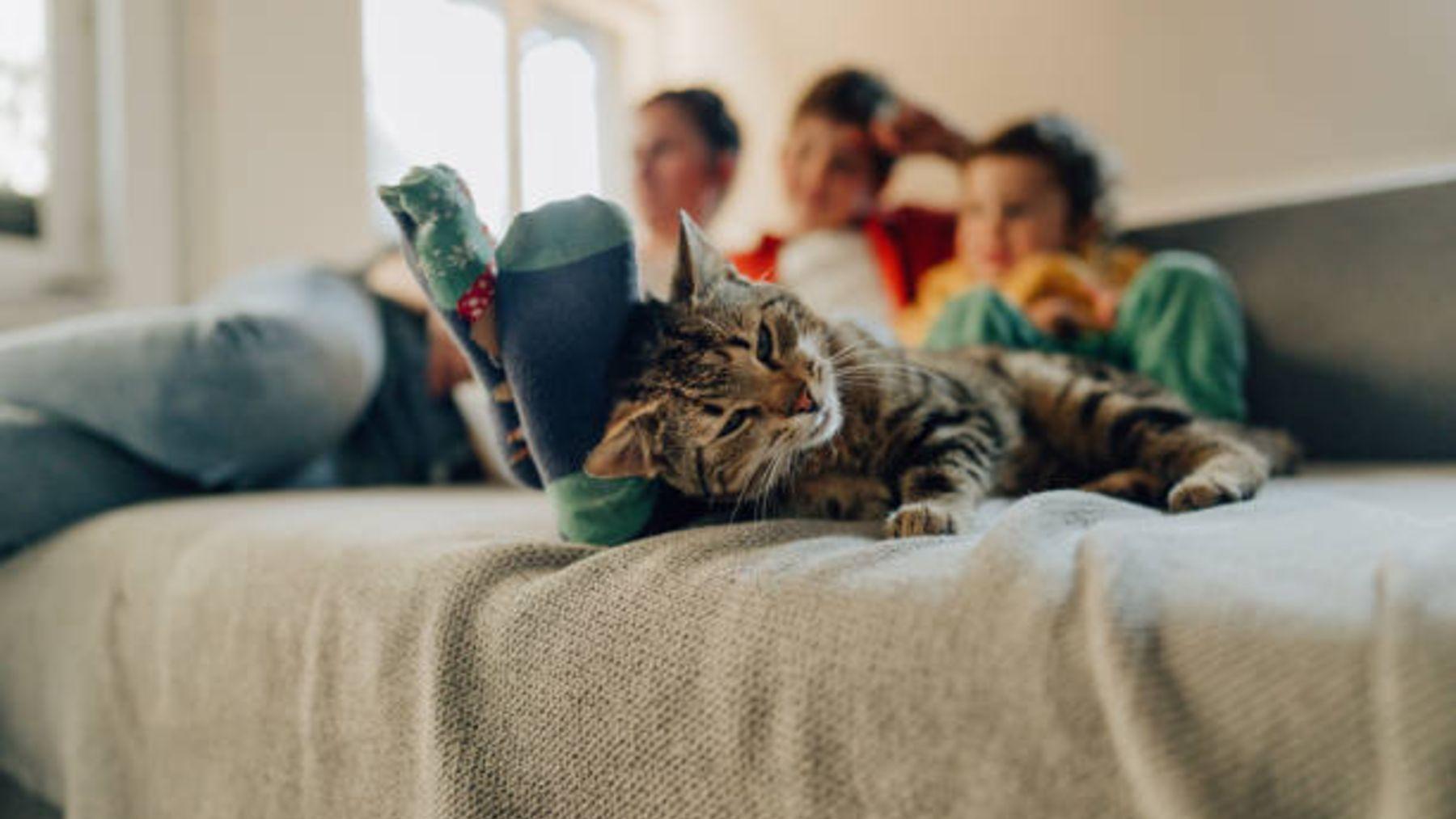 Descubre los principales beneficios de tener un gato en casa