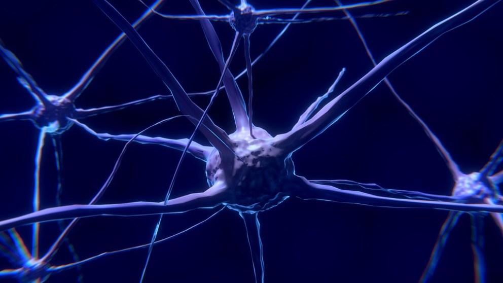 La neurona rosa de mosqueta, ¿la única 'única' en seres humanos?
