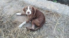 Un perro hace compañía durante toda la noche a un anciano con alzhéimer que estaba desaparecido en Burriana (EP).