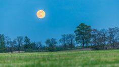 Descubre qué fase de la Luna es buena para sembrar