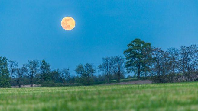 Qué fase de la Luna es buena para sembrar?