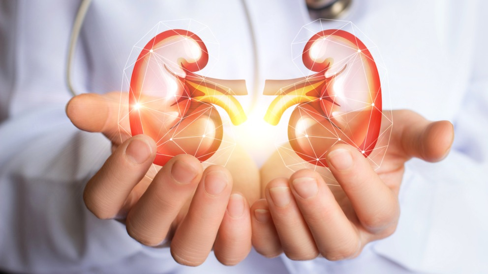 Los riñones son realmente importantes en nuestro organismo.
