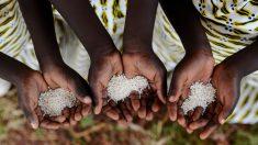 Descubre las recetas africanas más famosas