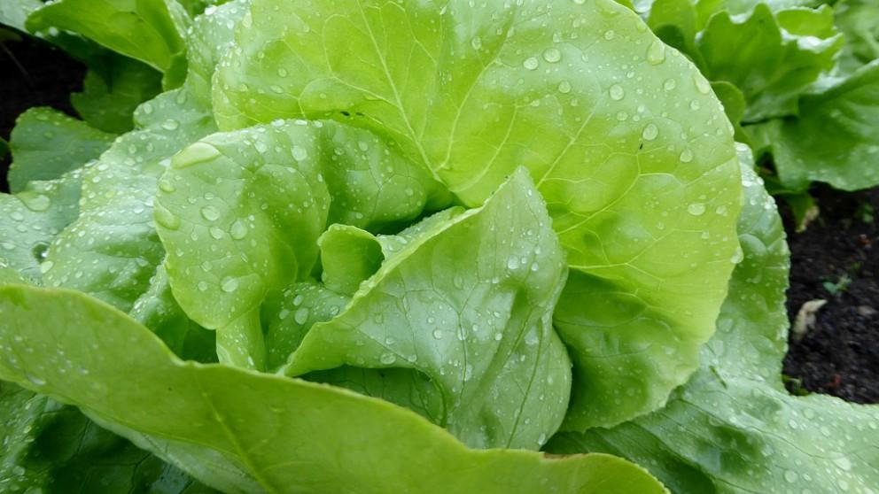 Verduras peligrosas para el bebé