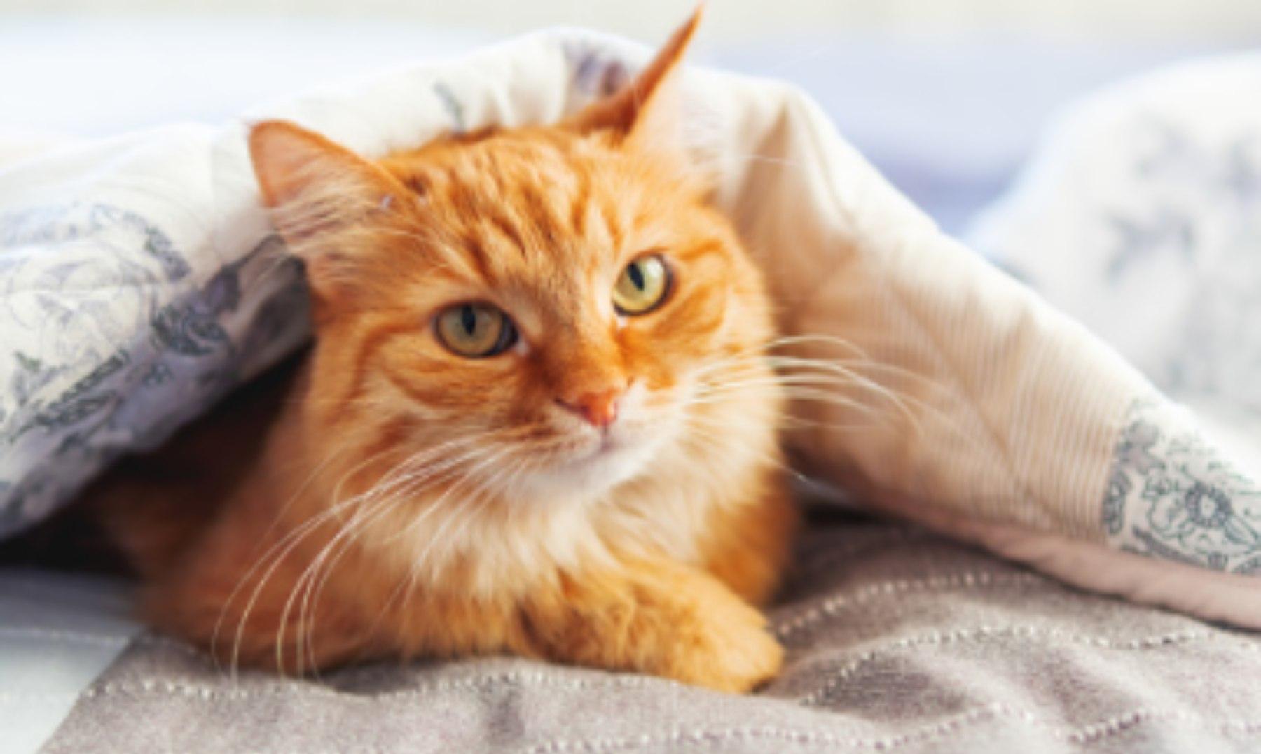 Cómo hacer una cama para gatos con una camiseta