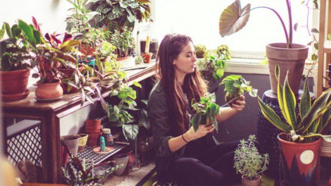 elegir plantas de interior