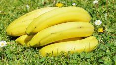 los nutricionistas lo recomiendan en las dietas porque nos da energía, presenta fibra que va bien para regular el intestino, y nos sacia.