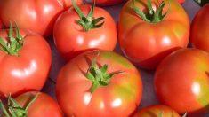 Es habitual realizarse mascarillas de tomate para dejar la piel más tersa y libre de impurezas.