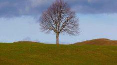 Conoce el árbol de la vida