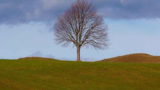 Qué Significa El árbol De La Vida
