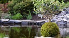 Kokedama es una técnica japonesa para jardinería