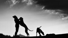 Por qué el perro es el mejor amigo del hombre según la ciencia