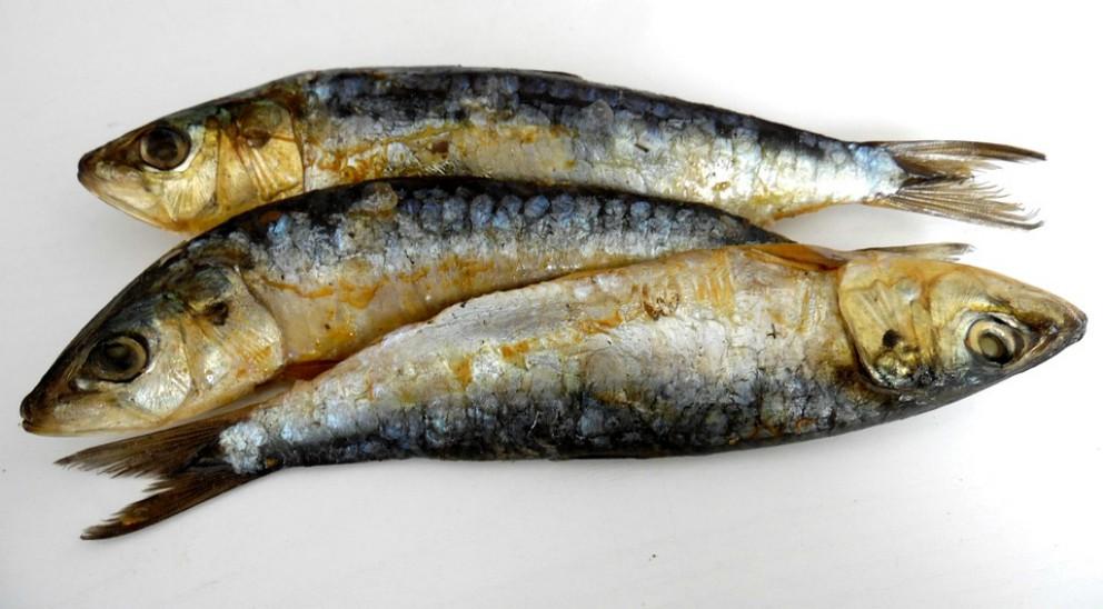 lista de pescados que se pueden comer en el embarazo