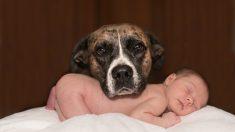 El perro tiene celos del bebé