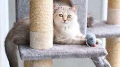 Todos los pasos para  hacer un rascador para gatos