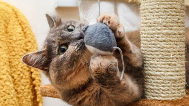 hacer un rascador para gatos